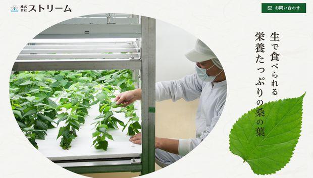 長野県岡谷市の3社が新会社設立。植物工場にて生食用の桑を栽培