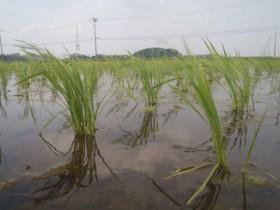 住友商事、農業用殺菌剤メトミノストロビンの日本国内における事業権を買収