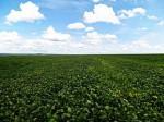 住友化学、農薬市場では世界最大のブラジルに農薬などの研究開発拠点を新設