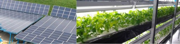 サンパワー、太陽光発電を利用したLED植物工場の一般向け分譲販売(一区画270万円から)