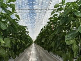発電過程から出るCO2と廃熱を植物工場に利用。キャタピラー社とサンセレクトが戦略的提携を発表