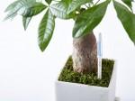 適切な水やりのタイミングを知らせる植物用水分計Susteeサスティーが2015年度グッドデザイン賞を受賞