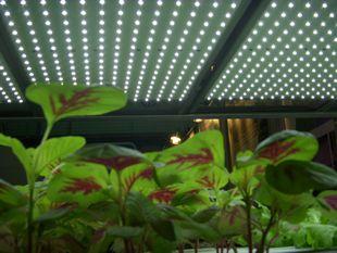 台湾・植物工場マッチング視察ツアーの報告