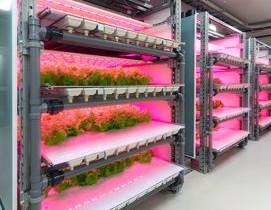 西松建設、玉川大学との連携事業・LED植物工場のショールームが完成