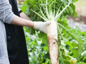 「THE FARM」食の安全や環境保全に取り組む農場に与えられる認証「JGAP」を取得