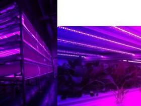 昭和電工と山口大、植物工場・高速栽培技術に関する世界展開へ