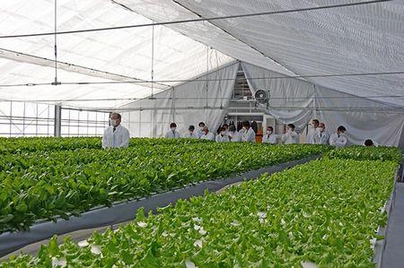 鹿児島県徳之島にて障害者雇用を進める初の水耕栽培施設がオープン、主に葉野菜を生産・将来的にはトマトの栽培も視野に