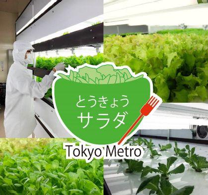 東京メトロによる植物工場、とうきょうサラダとして販売開始