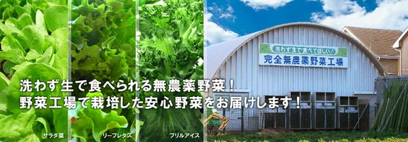 水耕・植物工場関連の企業が撤退・倒産する一方で規模拡大・WEBサイトをリニューアルする企業が急増(参入企業のまとめ)