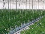 ロシアのVTB銀行がアルメニアにイチゴの植物工場プラント建設に資金提供
