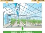 住友電工、千葉大学と共同にて砂栽培・環境制御による高糖度トマトの収量増大を目指す