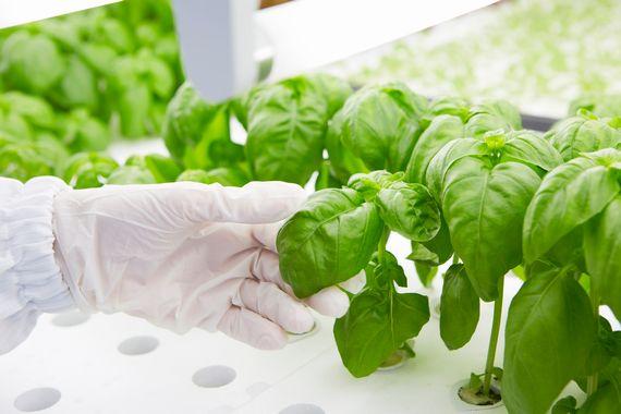 植物工場を運営する東芝とケンコーマヨネーズ社が業務提携