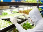 完全人工光型植物工場「東芝クリーンルームファーム横須賀」での生産開始
