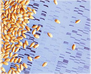トヨタ自動車、作物の品種改良を飛躍的に加速させる新規DNA解析技術を新たに開発