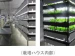 人工光型植物工場を活用した農福連携モデル(大阪手をつなぐ育成会)