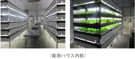 人工光型植物工場を活用した農福連携モデル