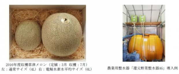 日本トリム、電解水素水の農業活用により草津メロンの収穫量130%向上、糖度18度前後のメロンを収穫