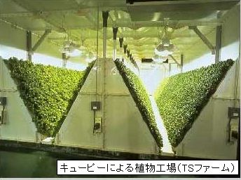 人工光型植物工場の6割が赤字。成功ポイントとは?