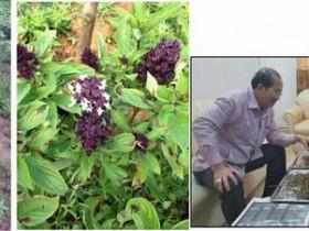 植物工場の照明開発を行うツジコー、ラオス伝統の薬草を健康食品原料へ