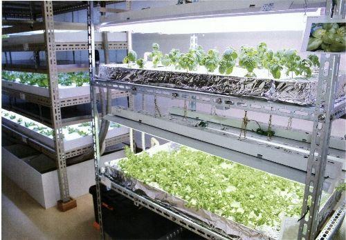 繊維機械分野の津田駒工業。植物工場事業に新規参入。成功の可能性・ヒントについて