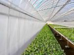 宇部エクシモが農業用ハウス内張り資材の新製品を発売