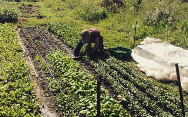 米国ワシントンDCでも都市型農業法案による支援も。屋上ファームや水耕栽培など幅広い生産方式が出現