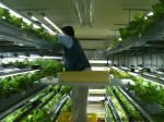 低コスト・コンテナ型植物工場の開発と障がい者就労支援を推進