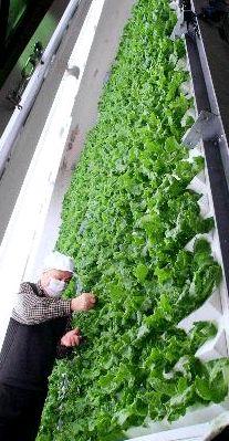 垂直式・植物工場(きゅぶふぁーむ)