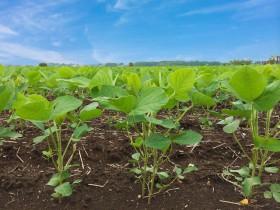 住友化学、米パデュー大と植物の画像診断など先進農業に関する新プロジェクトを開始