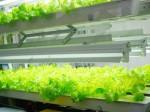 富士通とFPTによるショールーム型植物工場がベトナム・ハノイにオープン