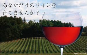 News:ゴルフ場を運営するヴィンテージリゾート、ワイン事業へ本格参入<ワインオーナーを募集>