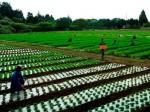 ワタミは25%を出資する農業生産法人ワタミファーム(千葉県山武市)を通じて農地の取得を始める。第1号となる農地は富里市の0.5ヘクタールを予定。有機栽培でレタスやニンジン、ダイコンを生産、居酒屋などで使う予定。