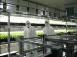 オリックス不動産、兵庫県養父市の植物工場にて初収穫