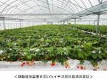 ヤンマー「バイオイノベーションセンター倉敷ラボ」が本格稼働。移動栽培装置を活用したイチゴの周年栽培試験など