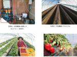ルートレックによる次世代養液土耕システム「ゼロアグリ」、日本有数のイチゴ生産者と同等の収穫量・食味を実現