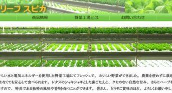 スマイルリーフスピカ、植物工場レタスがファミマの商品材料へ採用