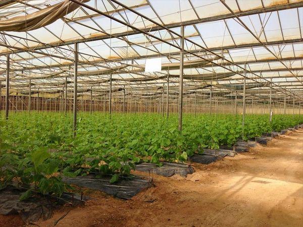 カタールの農業統計。生鮮野菜1万7千トンを輸入、国内農業人口は3,000名
