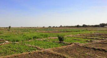 カタール、農業・エネルギーの最新技術による食料品の輸出入ギャップを解消