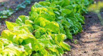 SOMPOホールディングス、イタリア農業保険会社を買収