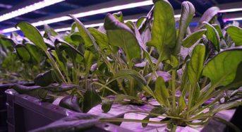 シナジーテック、アルミメーカーと連携して小型サイズの植物工場を開発