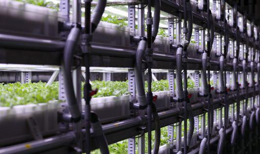 横手精工・工場内の空きスペースを活用。植物工場によるアイスプラントの生産へ