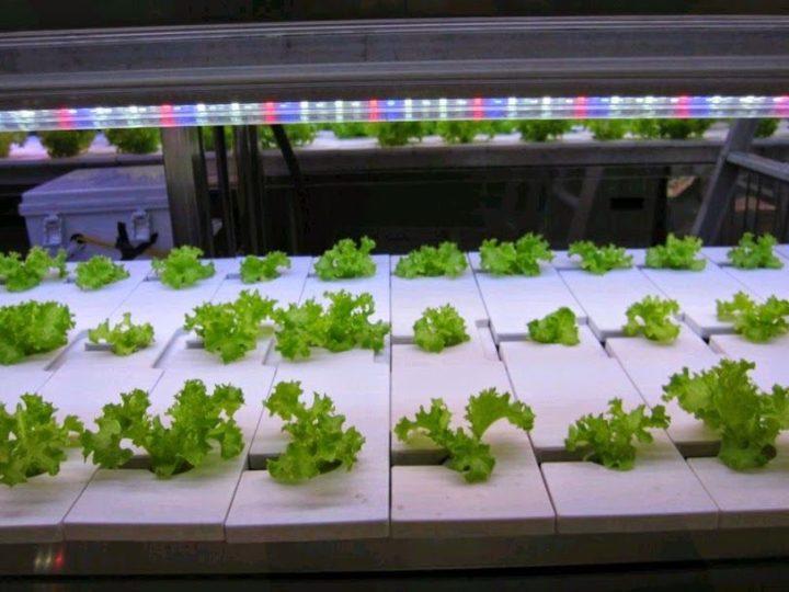 韓国の大手スーパー「ロッテマート」が店内に植物工場を設置