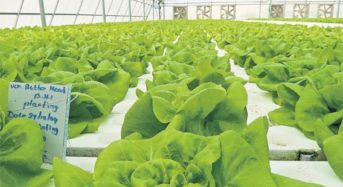UAE、36カ所の有機ファームが新設。植物工場ハイテク農業による生産も加速