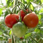 双日、メビオールによるフィルム栽培を採用したローコスト植物工場の開発
