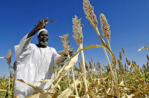 UAE国内生産は加速するのか?! 食料自給率36%、野菜は14%という結果に