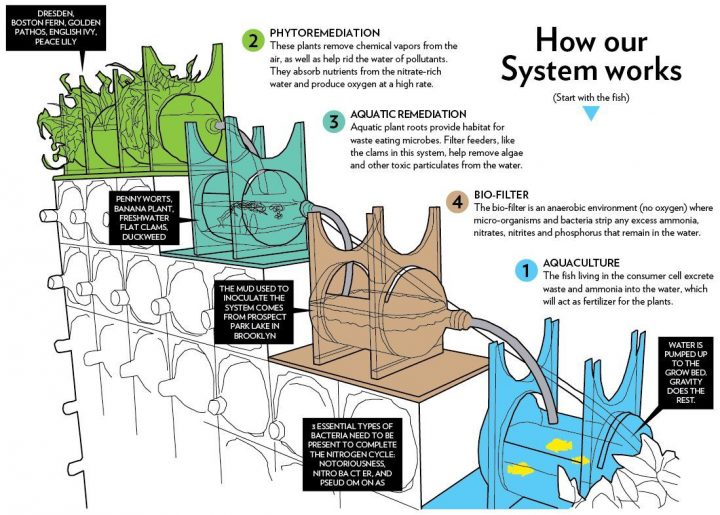 NYの芸術学校、アクアポニクスを応用した植物浄化システムを教育向けに開発
