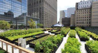 米国・NYマンハッタンの巨大タワー群に大規模な屋上ファームが稼働
