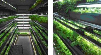 三協立山アルミ、富山に小型ユニット式の植物工場を導入。遊休工場施設の有効活用へ