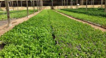 カタール国内の食糧安全保障計画、4万5千haの土地を農地へ