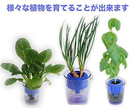 プラスチック成形メーカーによる「家庭用・水耕栽培キット」 1,000円前後で購入可能